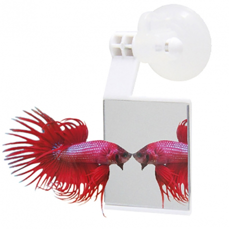 Betta Strike