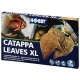 Catappa Leaves XL Hobby
