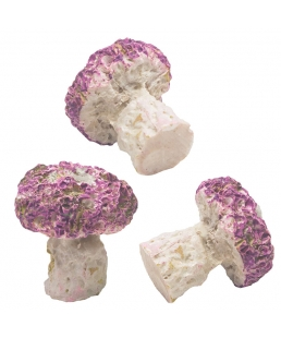 CORAL PLUGS